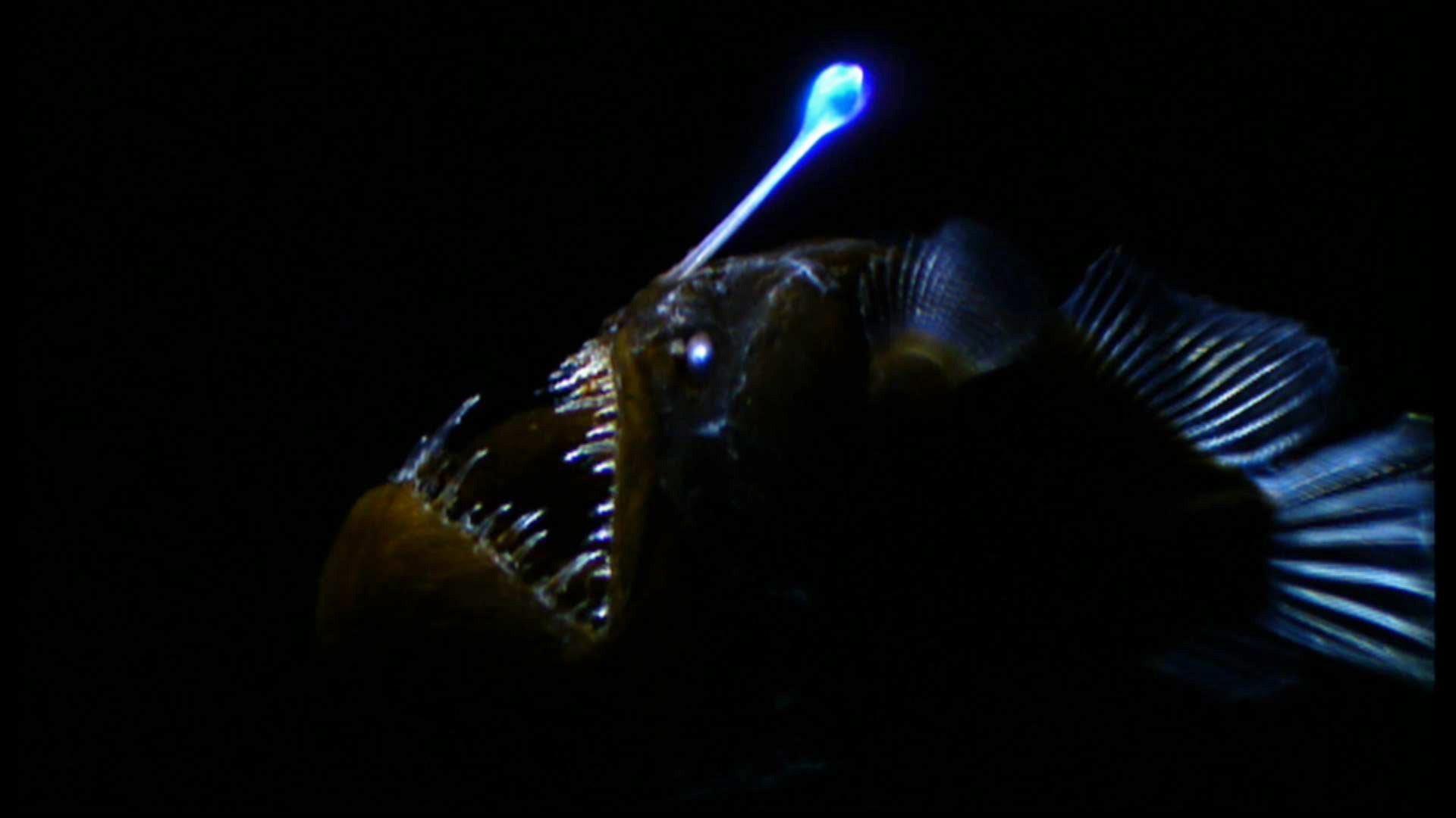 1 deep sea sam graves blog for Deep ocean fish