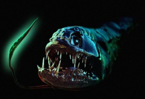 black-dragonfish