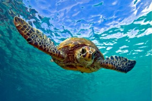 turtle-facial