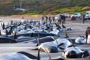 mass-whale-stranding